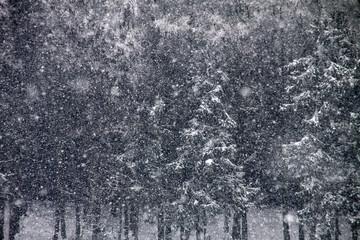 Es schneit im Winterwald