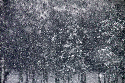 canvas print picture Es schneit im Winterwald