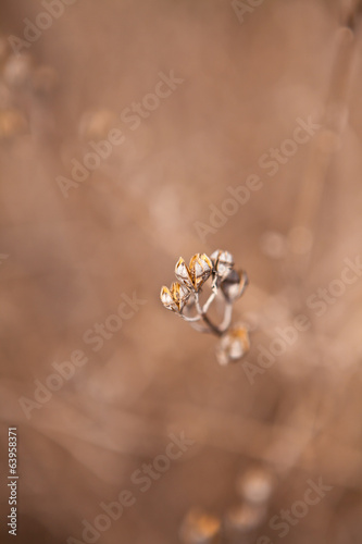 dried buds on a branch of a small depth of field