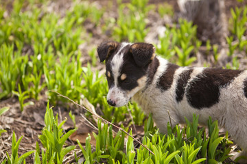 puppy dog on green grass, shallow depth of field