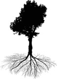 deciduous black tree with root on white