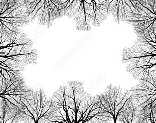 frame from black bare trees isolated on white