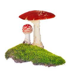 two fly agarics in green moss isolated on white
