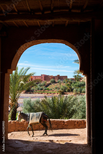 Donkey in traditional door in Morocco