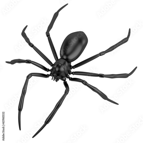 realistic 3d render of spider