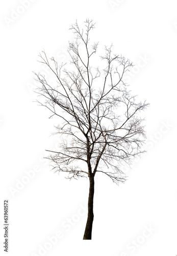 isolated winter dark bare tree