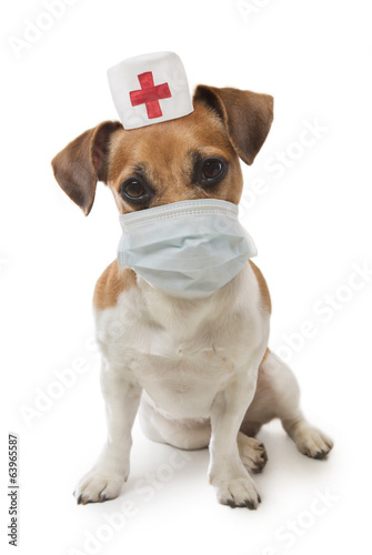 Medical Officer dog
