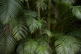 Dark Tropical Jungle Palm Frond Background - 63966383