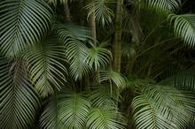 Ciemny tropikalnej dżungli liść palmy w tle