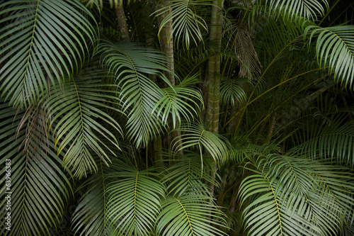Deurstickers Bomen Dark Tropical Jungle Palm Frond Background
