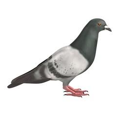 realistic 3d render of pigeon