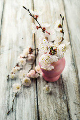 apricot blossoms in pink vase