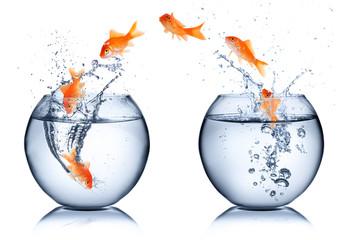 goldfish - change concept - isolated