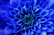 Macro of blue flower aster