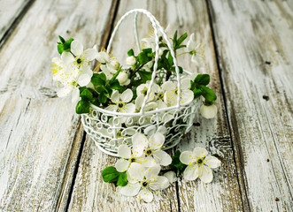 blossom cherry twigs in a metal basket