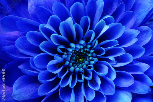 Macro of blue flower aster - 63968347