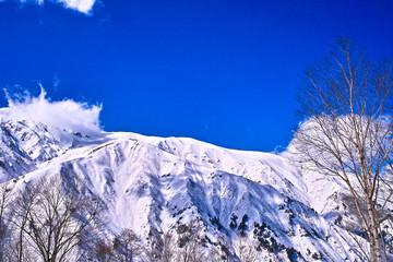 雪の八方尾根と樹木
