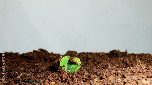 timelapse of seedling