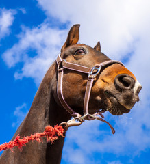 Pferd angebunden