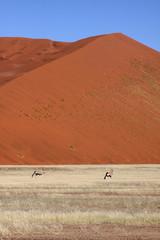 Big dune, 2 Orix foreground 2. Sossusvlei Namibia