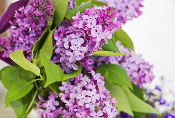 Ramo de lila y hojas verdes
