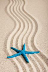 Starfish lying on the sand