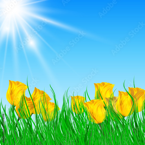 field of yellow tulips with bright sun
