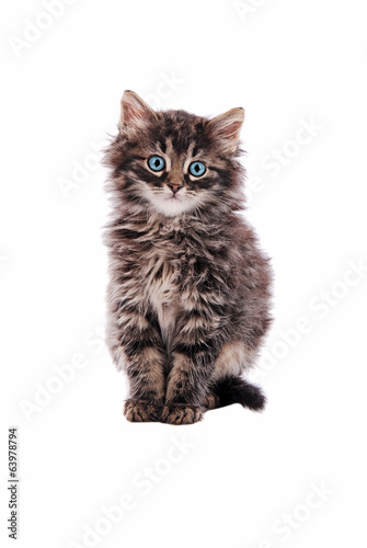 Adorable fluffy tabby cat