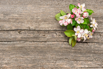 beautiful blossoms of apple tree flowers