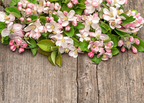 blossoms of apple tree on wooden background