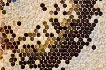 Yellow beautiful honeycomb.
