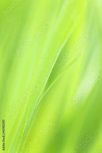 Photo of vibrant plant leafs