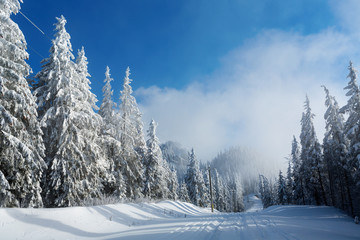 Road in mountain full of snow with firs