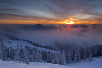 Winter colorful sunrise over the clouds with firs full of snow