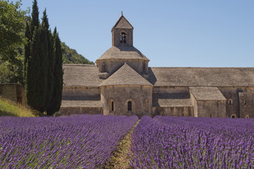 Abbey Senanque (Provence, France)