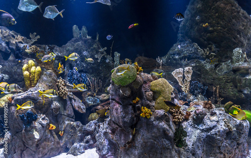 Fishes swimming around colorful corals under water