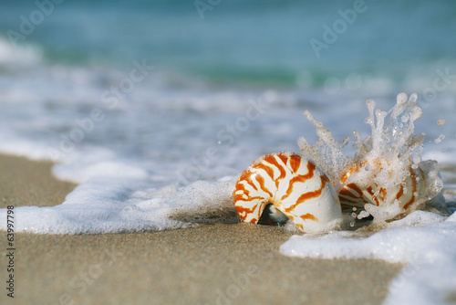 two nautilus shell with sea wave,  Florida beach  under the sun