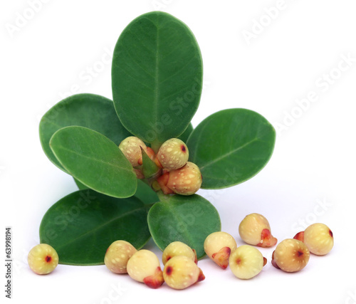 Banyan Fruits with leaves