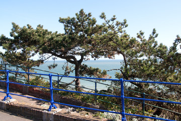 blue railings and pine trees