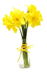 Narcissus flowers posy in vase
