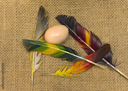 bird's egg and colored feathers