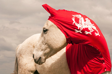 Horse red lycra hood