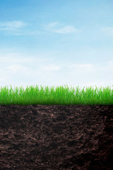 Growth of grass in soil