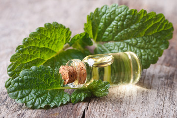 lemon balm leaves close up with a bottle of oil