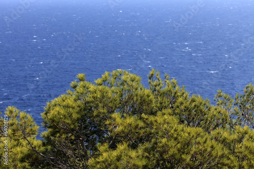 canvas print picture mediterrane Vegetation am Meer