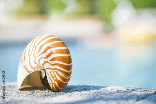 nautilus shell at resort swimming pool edge
