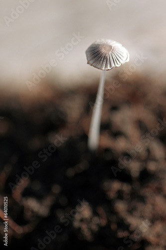 Small mushrooms growing on the ground.