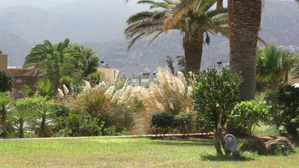 Greece, Crete. Garden at the hotel