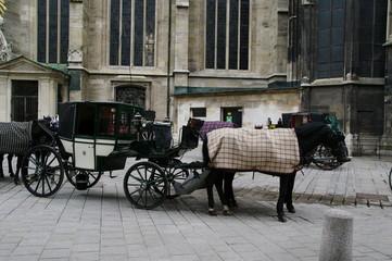 Fiaker Kutsche in Wien 1