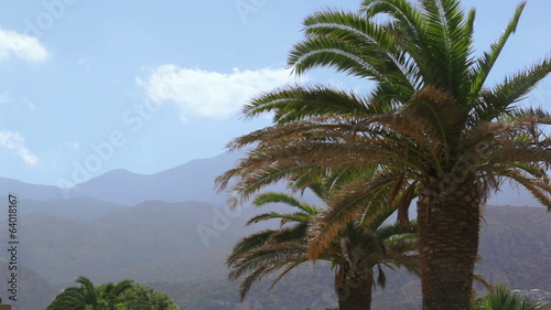 Palm trees on a background of mountains in windy weather